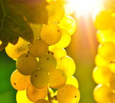 area wine