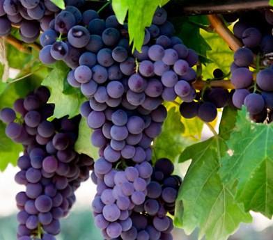 roseville winery