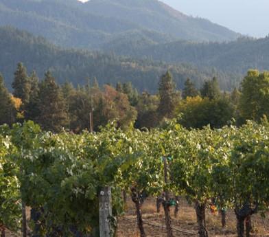 hillsboro winery